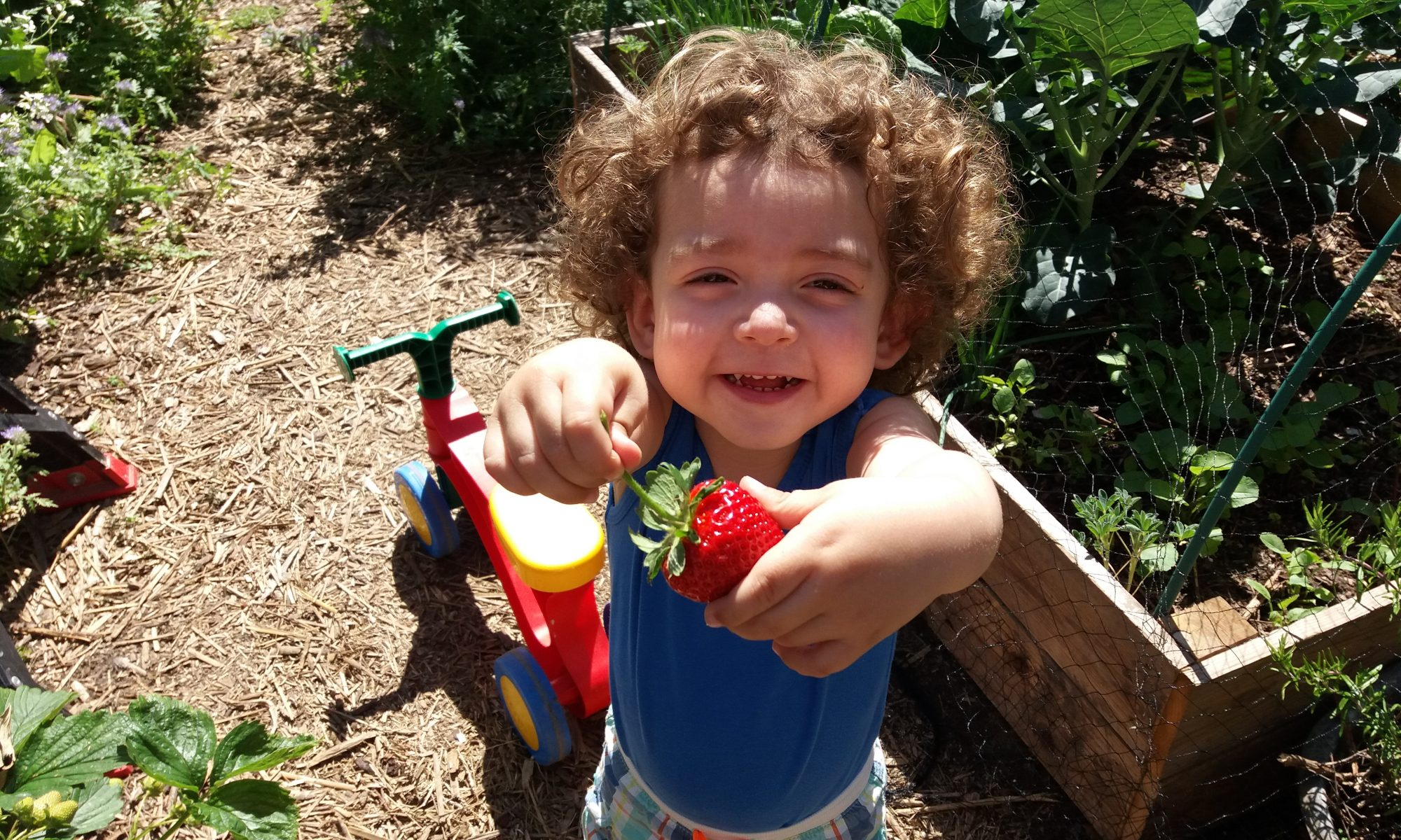 Strawberries, cute, permaculture, gardening, toddler, landscaping, bio, eco, sustainability, sostenible, sustentable, ecologico, ecologia, zerowaste