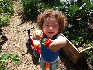 Strawberries, cute, permaculture, gardening, toddler, landscaping, bio, eco, sustainability, sostenible, sustentable, ecologico, ecologia, zerowaste