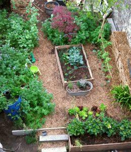 urban garden, permaculture, salads, ensalada, comestible, jardin comestible, zero waste, gandazwam, ourecolifestyle, urbanjungle, urban jungle, blessing, playground, bio, eco, sostenible, sustainable, minimalist
